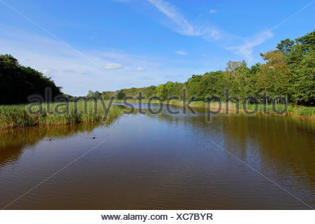 Prerower Strom, an arm of the Baltic Sea, Germany, Mecklenburg-Western Pomerania, Darss, Prerow - Stock Photo