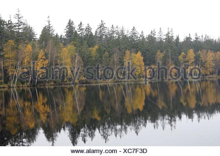 Trees on the bank of lake in the autumn