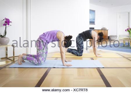 beautiful woman doing cat pose on yoga class studio shot