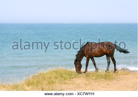 Horse on the beach - Stock Photo