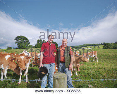 Armer and son with Guernsey calves - Stock Photo
