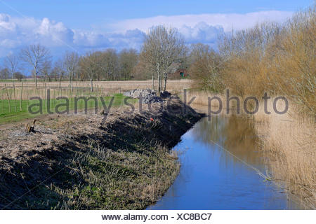 drainage ditch with reed, Germany, Lower Saxony, Cuxhaven - Stock Photo