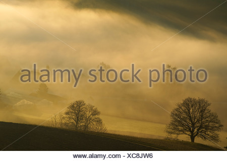 The evening sun shining on fog over Wildensbuch, Canton Zurich, Switzerland, Europe - Stock Photo