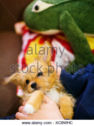 A boy holding a puppy Sweden - Stock Photo