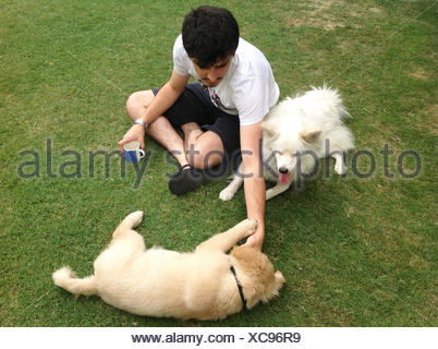 Man playing with spitz dog and golden retriever - Stock Photo