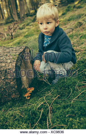 Little boy crouching in forest, looking at honey fungi - Stock Photo