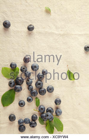 food aliment sweet modern modernity brown brownish brunette new leaves agriculture farming summer summerly ripe harvest - Stock Photo