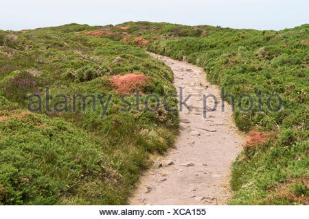 heathland with footpath at Cap Frehel in Brittany, France - Stock Photo
