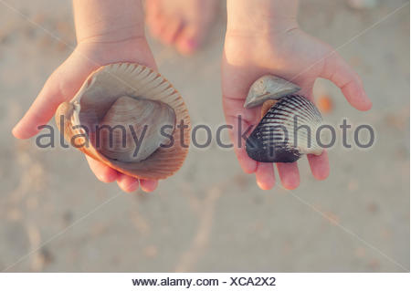 Girl holding seashells in her hands on beach - Stock Photo