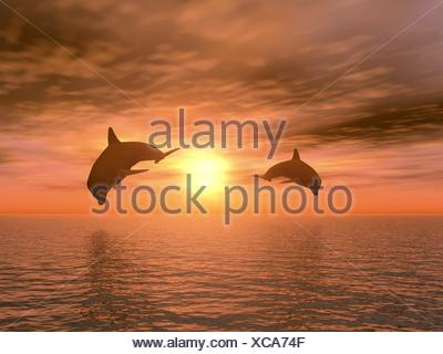two dolphin - Stock Photo