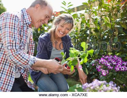 Senior couple planting in garden - Stock Photo