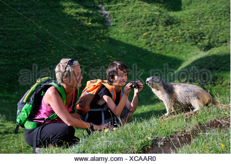 alpine marmot (Marmota marmota), mother and son talking pictures of a marmot in mountain meadow, France - Stock Photo