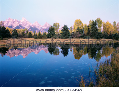 Grand teton reflecting in a beaver pond - Stock Photo