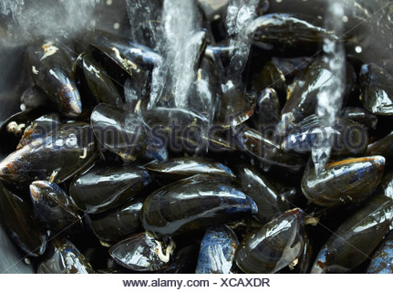 Scottish Mussels being washed - Stock Photo