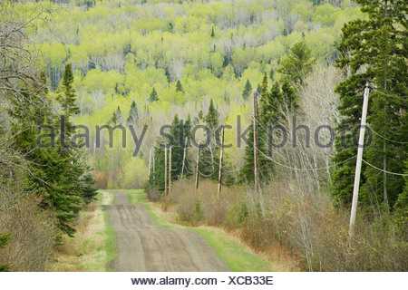 hymers, ontario, canada; electricity wires running along a country road - Stock Photo