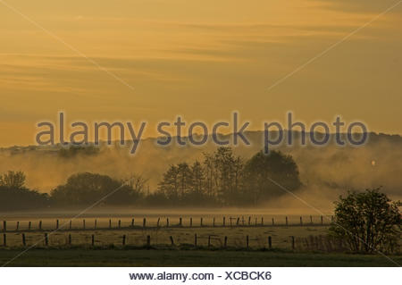 Morning spirit with waft of mist - Stock Photo