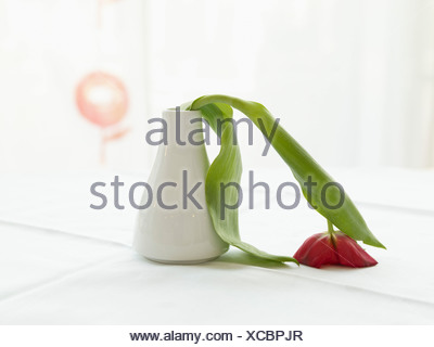 Germany, Cologne, Vase with limp tulip, close up - Stock Photo