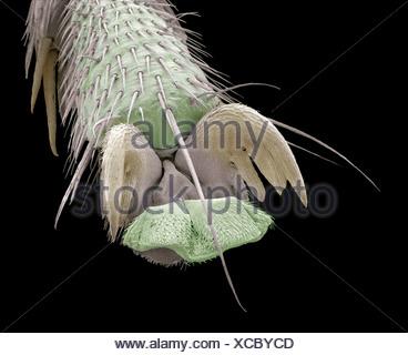 Scorpion fly foot, SEM - Stock Photo