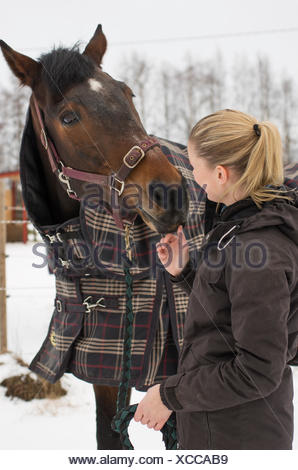 Finland, Pohjanmaa, Pietarsaari, Woman looking at horse wearing blanket - Stock Photo