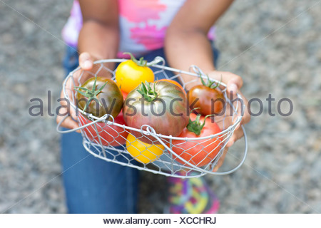 Girl holding basket of ripe tomatoes, cropped image - Stock Photo