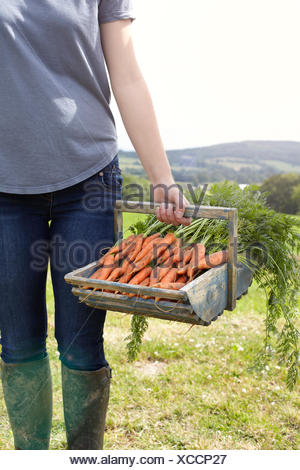 Cropped shot of teenage girl carrying a basket of fresh carrots - Stock Photo