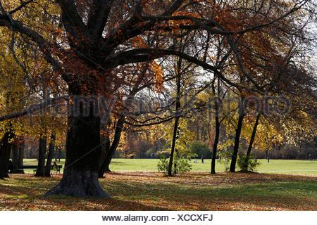 Englischer Garten, English Garden, Munich, Bavaria, Germany, Europe - Stock Photo