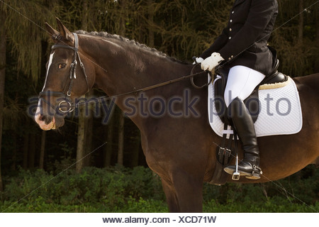 side view of dressage horse with rider - Stock Photo