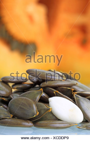 Unshelled and shelled seeds in front of pulp from the Styrian Oil Pumpkin - Stock Photo