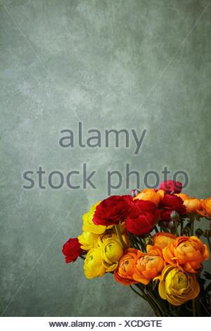 Hamburg, Close up of ranunculus - Stock Photo