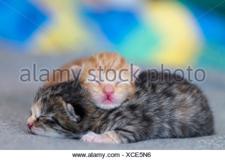 Germany, Newborn kittens sleeping on blanket, close up - Stock Photo