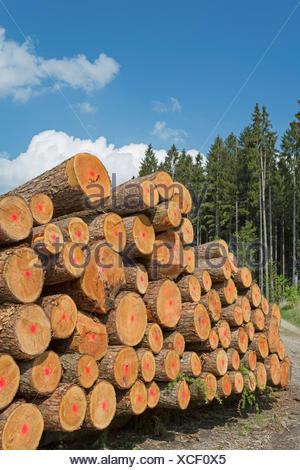 Holzwirtschaft in Deutschland