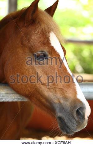 indicate show beautiful - Stock Photo