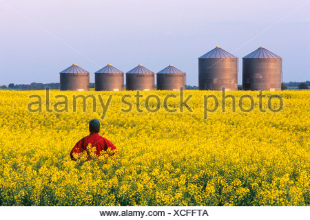 Man in canola field with grain bins in the background, Tiger Hills, Manitoba, Canada. - Stock Photo