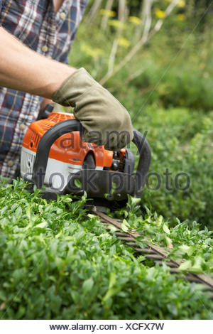 hedge clippers,hedge trimming - Stock Photo