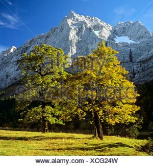 Grosser Ahornboden, autumn, Mt. Spritzkarspitze, Eiskarln, Karwendel Range, Tirol, Austria - Stock Photo