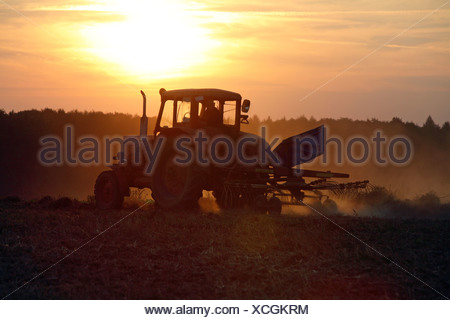 Tractor turning hay on a field at sunset, Prangendorf, Germany - Stock Photo