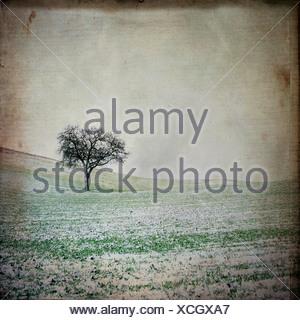 tree in landscape in winter - Stock Photo