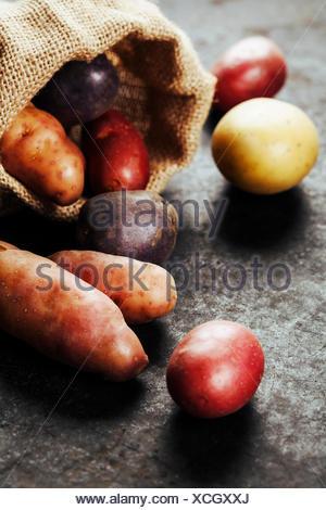 Raw colorful potatoes in burlap bag - Stock Photo