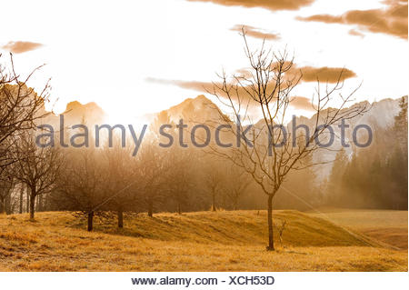 Single tree of an orchard meadow in the violent back light of the sundown about the Karwendelgebirge (mountains) with fog. - Stock Photo