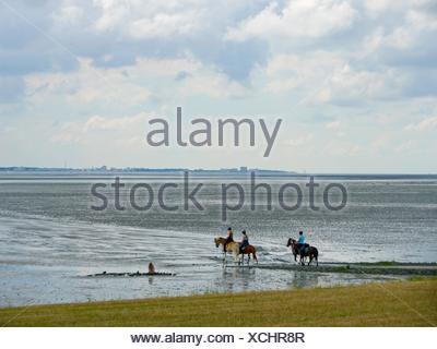 Horses in Wadden Sea at Island Neuwerk, Elbe estuary, North Sea, Hamburg, Germany. - Stock Photo