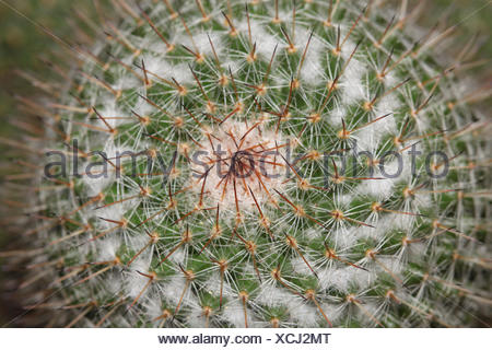Close up of cactus texture background - Stock Photo