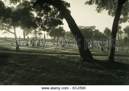 Elderly male figure walking in cemetery under trees - Stock Photo