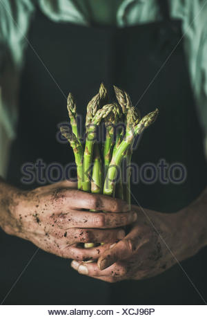 Bunch of fresh uncooked seasonal green asparagus in dirty man's hands, selective focus, vertical composition. Gardening and local farmer's market conc - Stock Photo