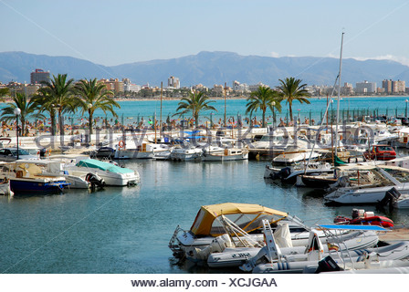 Boats in Club Nautic s'Arenal, marina with palm trees in Arenal, Majorca, Balearic Islands, Mediterranean Sea, Spain, Europe - Stock Photo