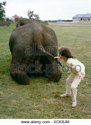 Child pulls elephant on tail, England, Great Britain - Stock Photo