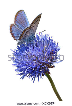 Blue butterfly on flower cutout - Stock Photo