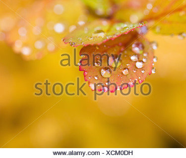 Water droplets on autumn leaves - Stock Photo