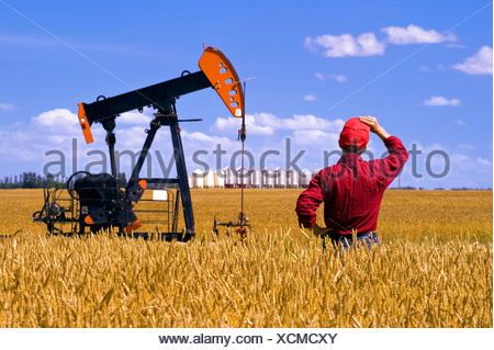 Man looks out over a harvest ready wheat field with an oil pump jack and grain bins in background near Sinclair Manitoba Canada - Stock Photo