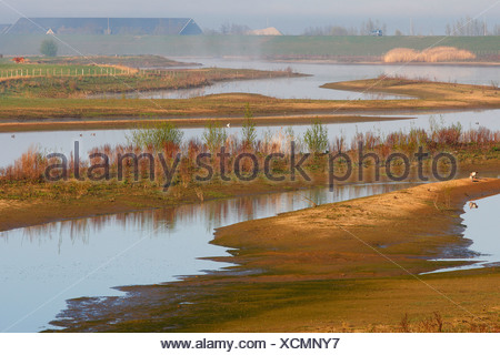 Waal river scenery, Netherlands, South Holland, Lexmond - Stock Photo