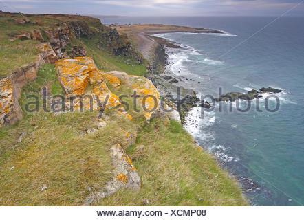 cliffbirds, birdcolony on top of sea cliff, Norway - Stock Photo
